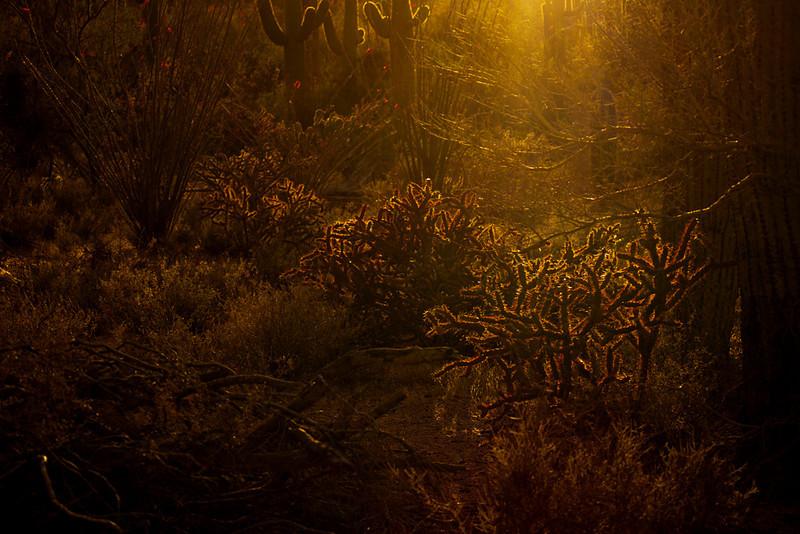 Afterglow, Saguaro National Park