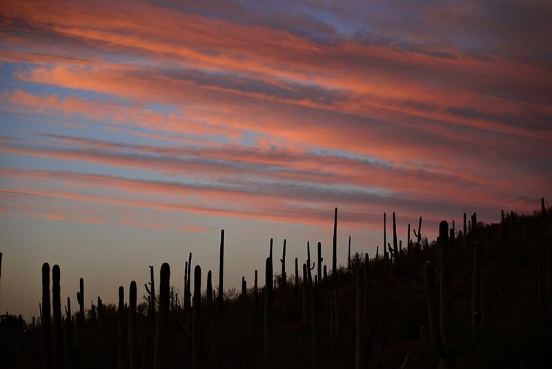 Saguaro Sunset, Tucson