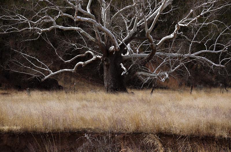 Tree at Harshaw