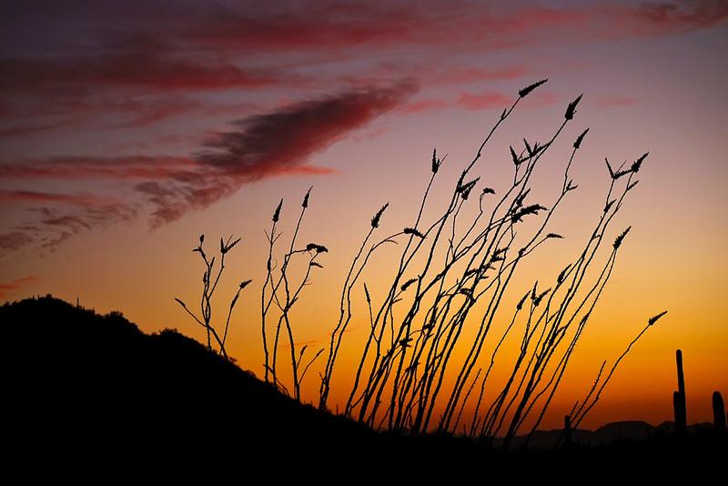 Evening wind, Saguaro National Park