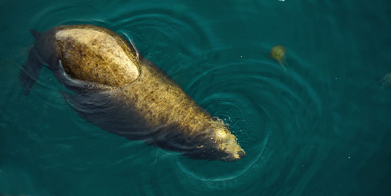 Sea Lion and Jellyfish, Monterey, California