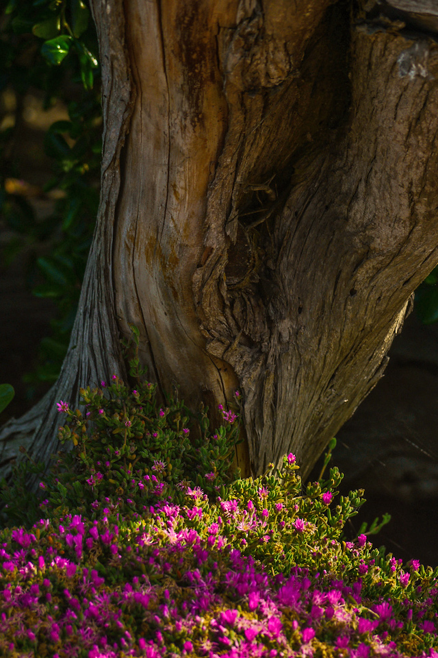 Glowing garden, Carmel, California