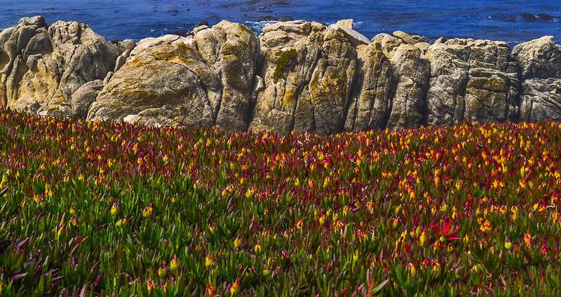 Wildflowers, Carmel, Calfornia