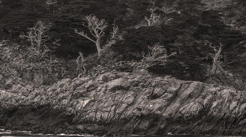 Shoreline, Point Lobos, California