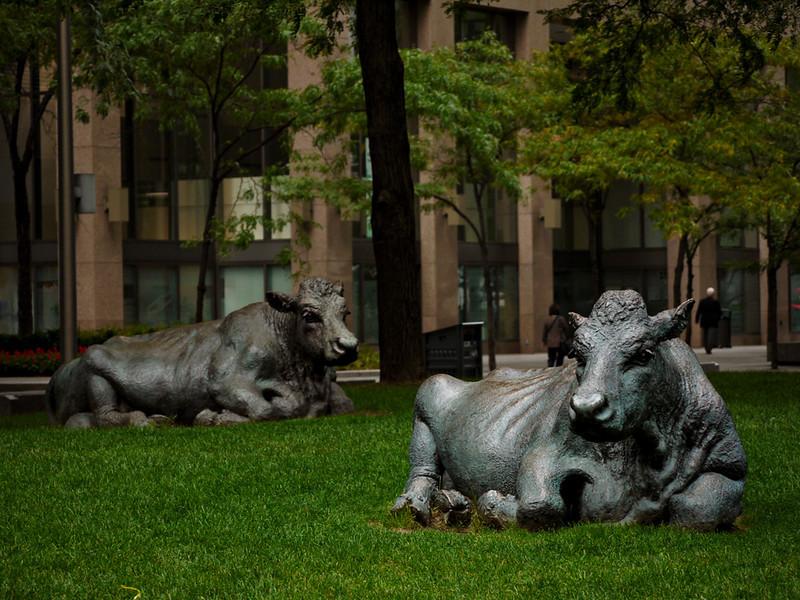Bronze cows, Toronto