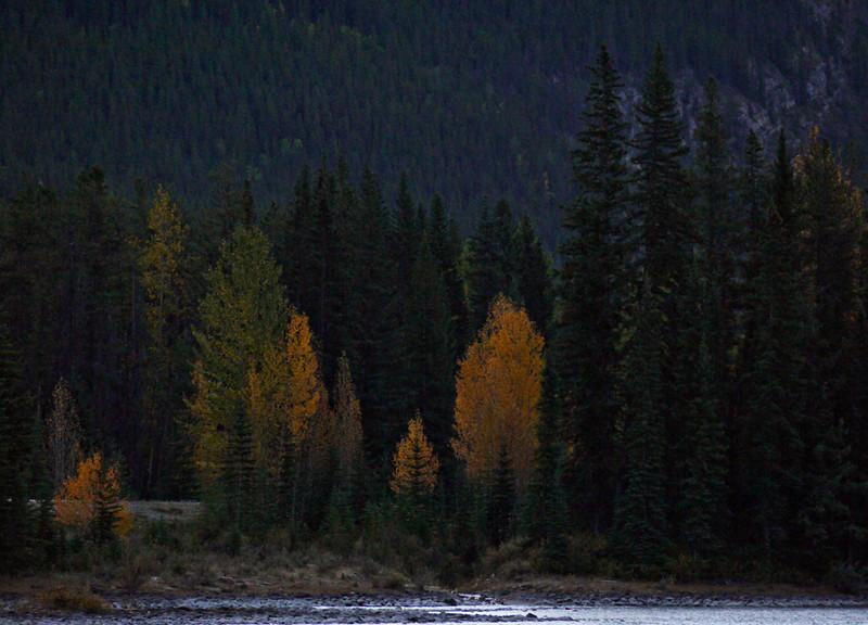 Athabasca River, Jasper National Park