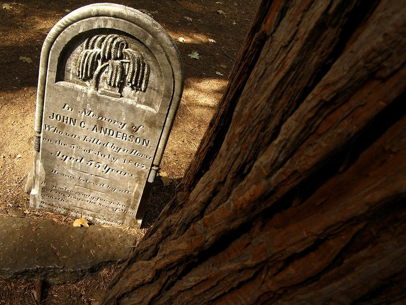 John Anderson, Killed by a Horse in 1867 - In Yosemite's Pioneer Cemetery, I found this explicit gravestone, marking a plot which has surely become by now a part of the root system of the giant redwood just adjacent to it.