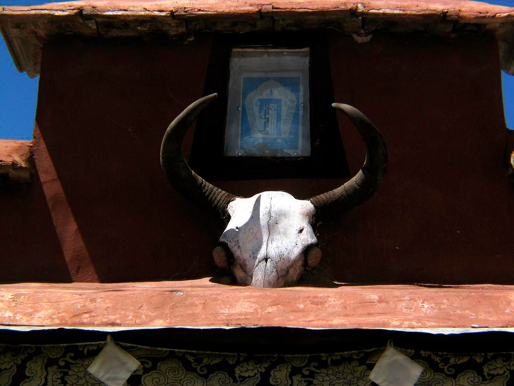 Yak skull, Lhasa - The Tibetan home we visited in Lhasa had the skull of Yak settled into the roofing over its front door. Good fortune, faith, and perhaps just luck are supposed to come from such symbols.