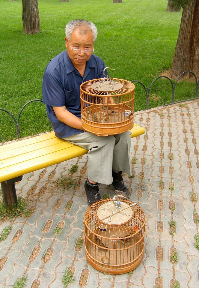 Birdman, Beijing - It is customary in China to take pet birds into a park and give them some fresh air.