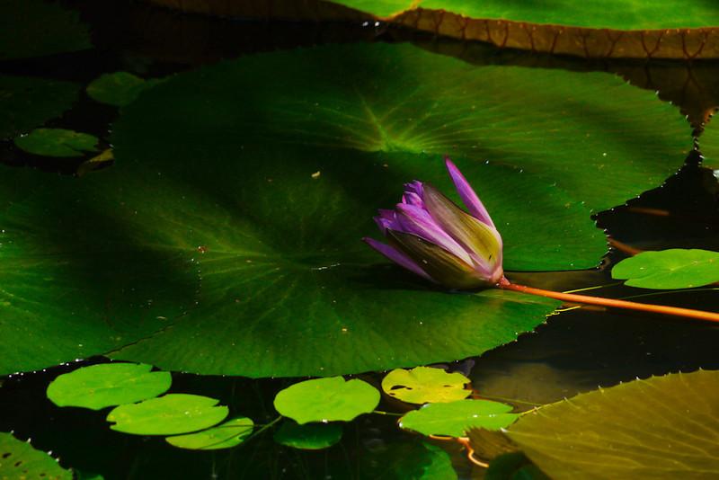 Fallen flower, Belem