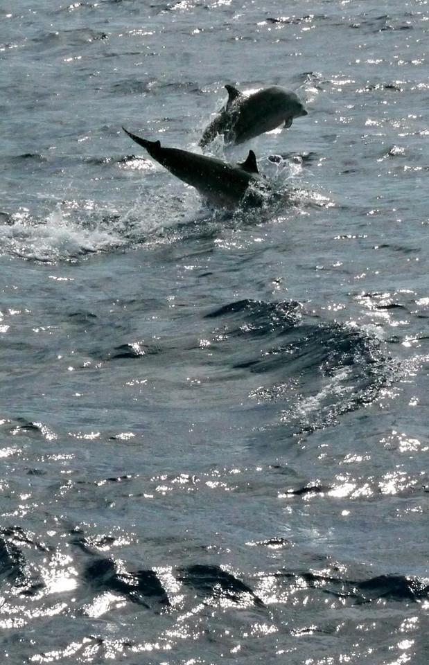 Leap, Dominica