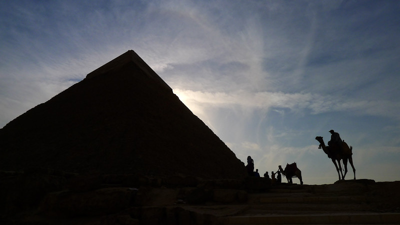 Camels at the Pyramids, Cairo, Egypt