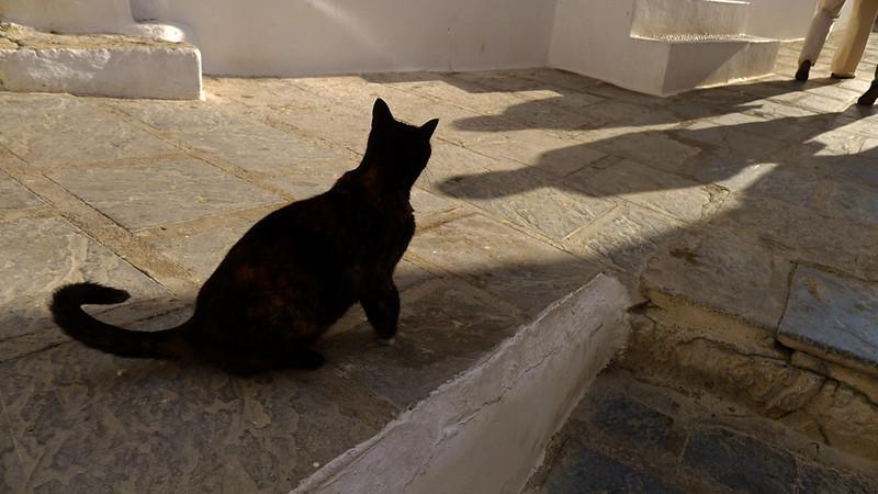 Stalker, Lindos, Rhodes, Greece