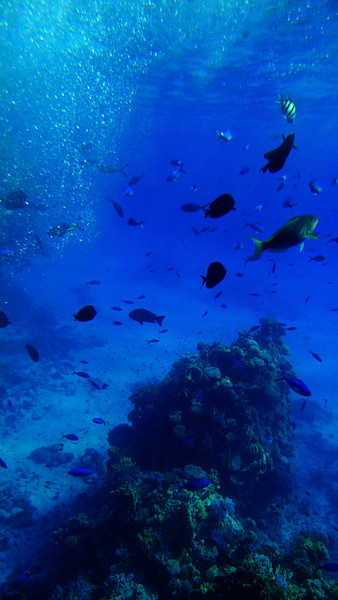Red Sea, Sharm El Sheik, Egypt