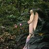 25 Islolation, Bonaventure Cemetery, Savannah, Georgia