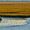 53 The Marshes of Glynn, Inland Waterway, off Georgia coast