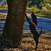44 All bark, Sapelo Island, GA
