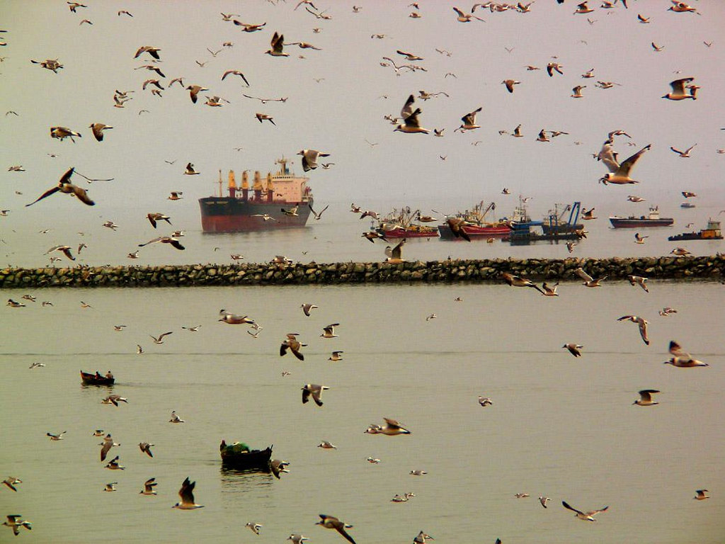 Bird Storm, Callao, Peru - As we arrived at Lima's port city, Callao, seabirds swirled about our ship by thousands. This is what it looked like. You can almost feel the flapping of the wings and hear the shriek of their calls.
