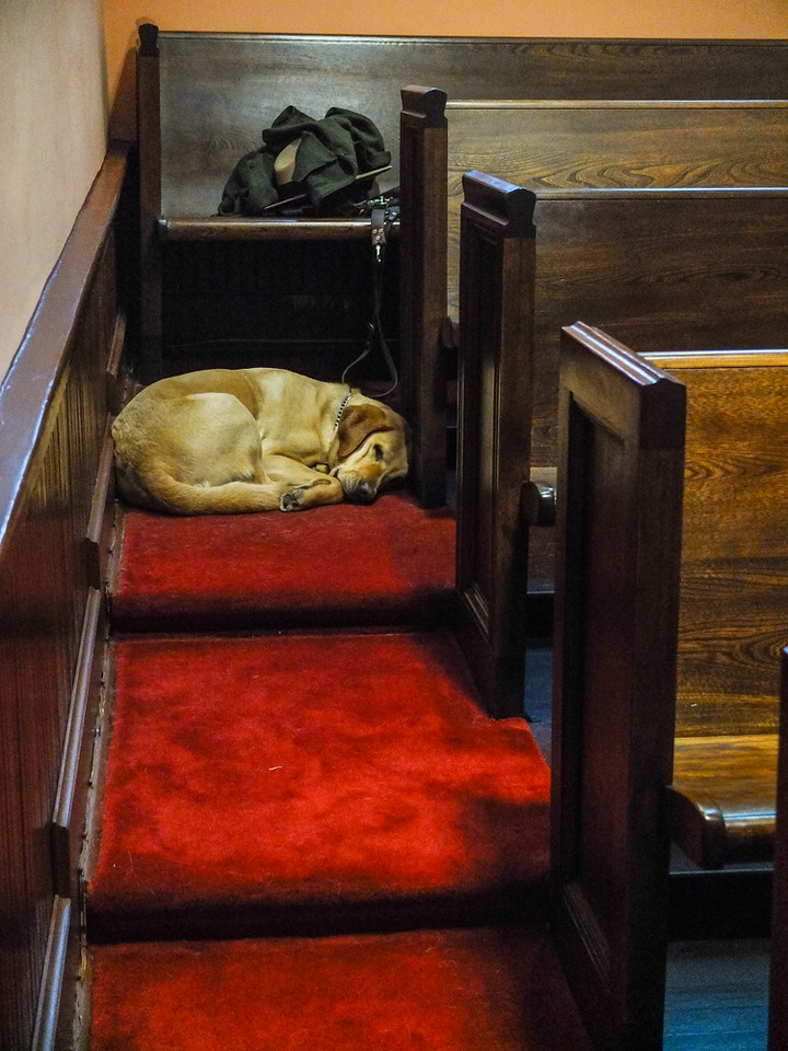62  Guide Dog, Ebenezer Baptist Church, Martin Luther King, Jr  National Historic Site, Atlanta, Georgia