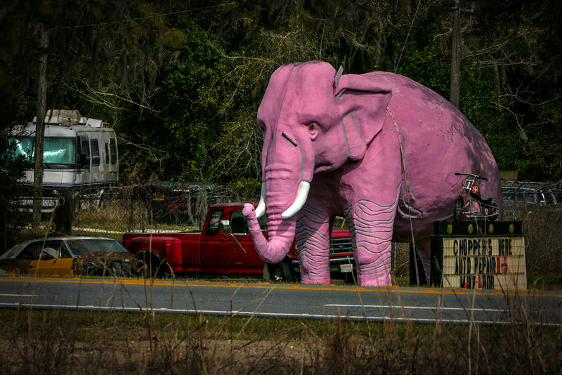 42  Pink Elephant, near Inverness,Florida