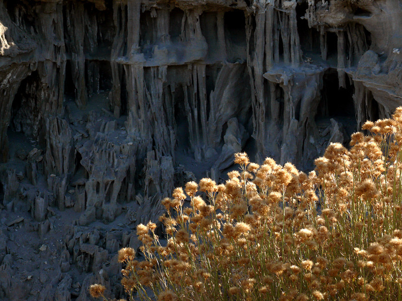 Sand Tufa, Mono Lake - Sand Tufas are formed as freshwater springs percolate through Mono Lake's briny bottom. Eventually, the bottom becomes dry land as the lake shrinks. The sand tufas are intricate sand tubes and columns, exposed as winds strip away their sandy coverings.