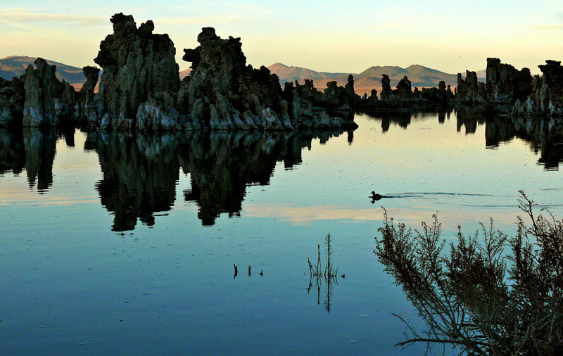 Dusk at Mono Lake - An Eared Grebe glides past ancient tufa, creating a scene of tranquility in a surreal setting.