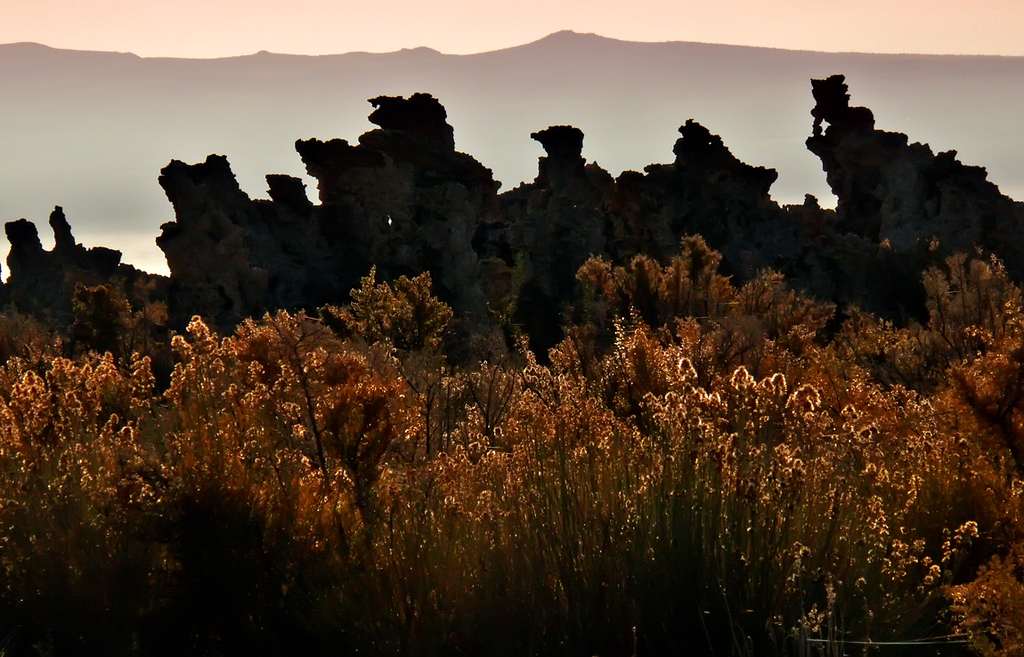 On Parade, Mono Lake - The tufa towers that distinguish California's Mono Lake from all other lakes seem to be on the march this morning.