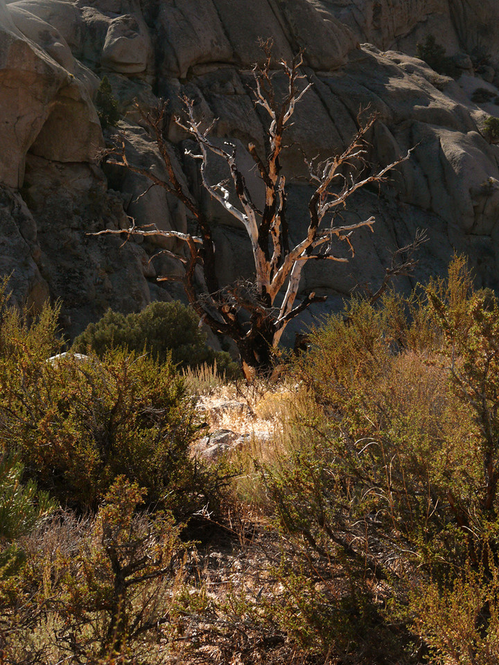 Scorched tree, Buttermilk Hills - A scorched tree still stretches its graceful limbs towards us.