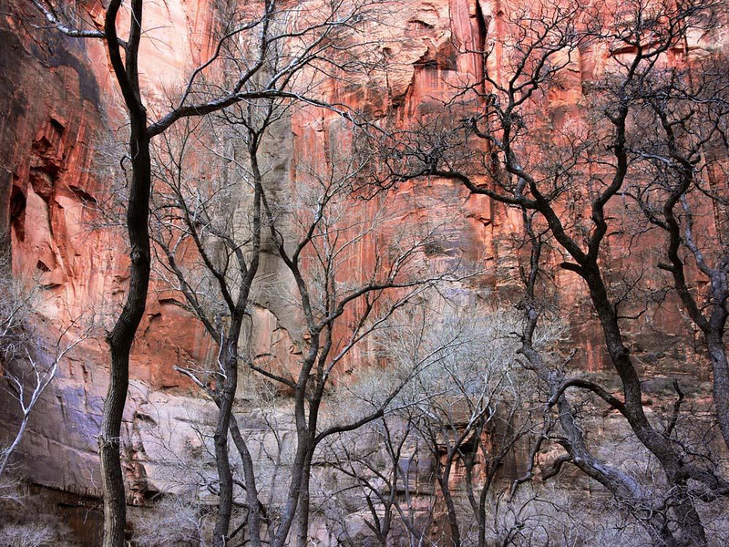 "The colors of Zion Canyon - The huge cliff known as the ""Temple of Sinawava"" marks the end of Zion Canyon, the most visited section of this vast National Park. The name was given to this cliff by the area's early Mormon settlers in the 1860s."