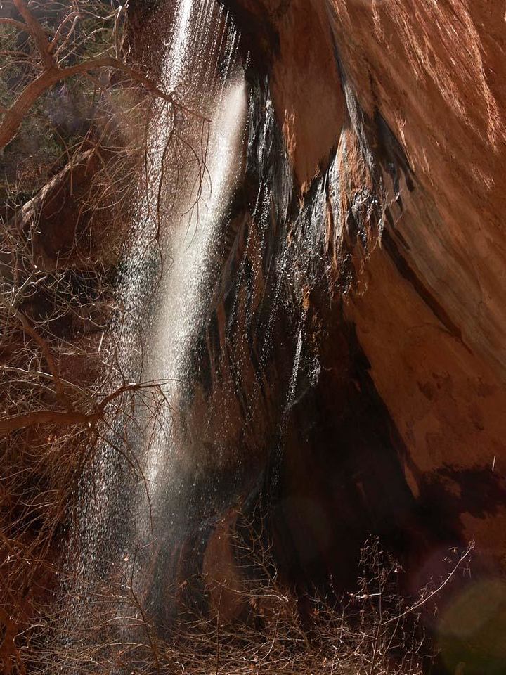 Cascade - A backlighted waterfall plunges over a cliff into Zion's Lower Emerald Pool.