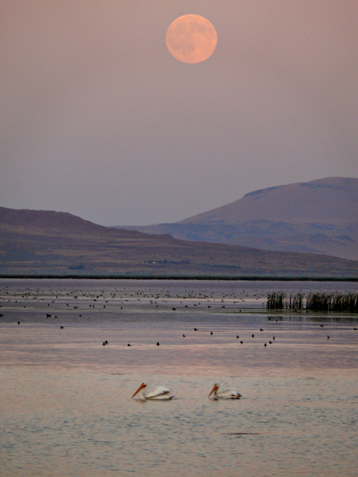 Sanctuary, Tule Lake Refuge