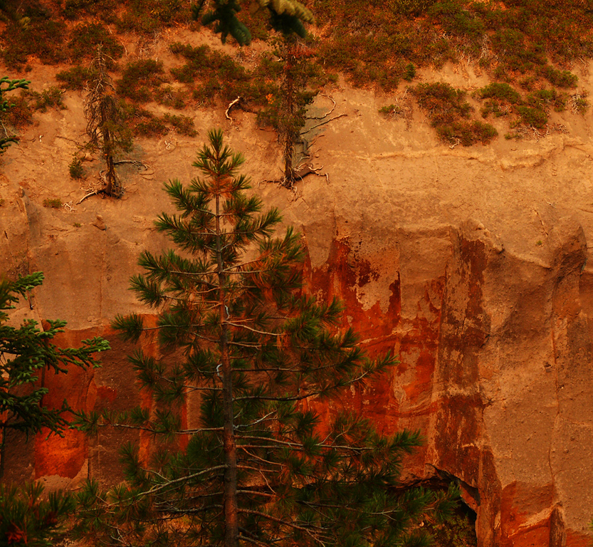 Tapestry at Annie's Creek, Crater Lake, OR