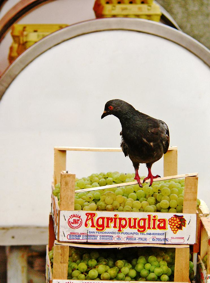 Italian Grapes, Croatian Pigeon - I caught this trespasser in the Dolac, Zagreb's colorful fruit and vegetable market.