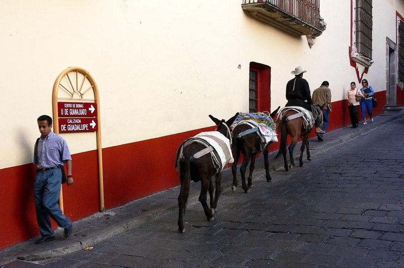 Burro Team - A string of burros may be an uncommon sight in most cities, but are frequently seen in Guanajuato.
