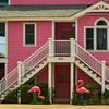 50  Pink lodging, Island of Palms