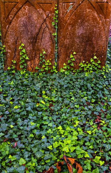 41  Consumed by ivy, St  Philip's Grave Yard