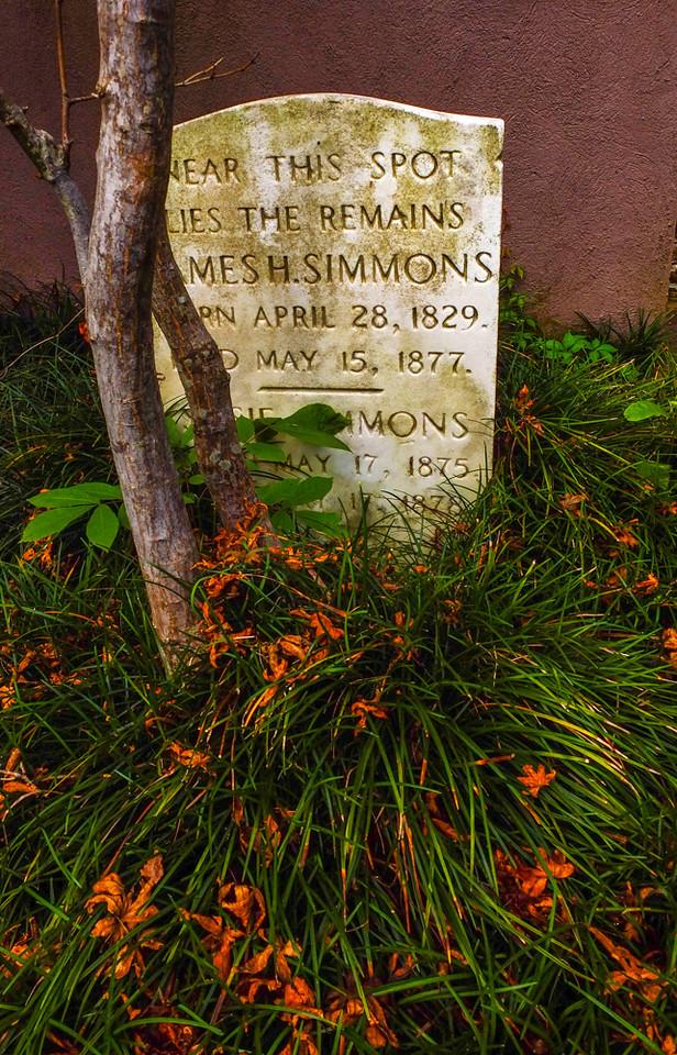 34  Sprouts, Magnolia Cemetery