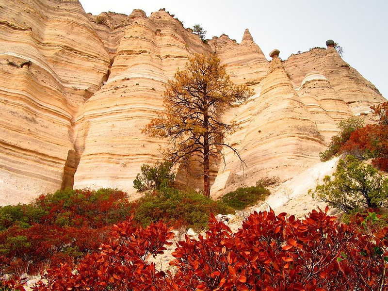Colors at Tent Rocks - The vivid colors of foliage play against the magnificent cliffs of Tent Rocks National Monument.