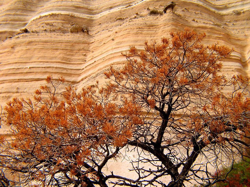 The layered cliffs at Tent Rocks - The great cliffs at Tent Rocks National Monument soar as high as ninety feet.