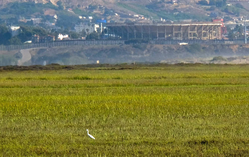 85  Egret, Tijuana River National Estuary, Imperial Beach, CA