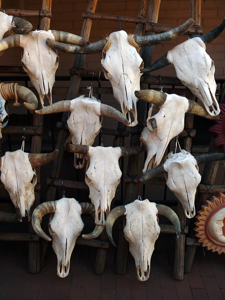 "Cattle skulls, Santa Fe - Much of Santa Fe is devoted to the marketing of a sentimentalized version of the ""Old West."" There is apparently a brisk trade in skeletal bovine crania, probably due to their association with the art of Georgia O'Keefe, who lived and worked in nearby Abiquiu."