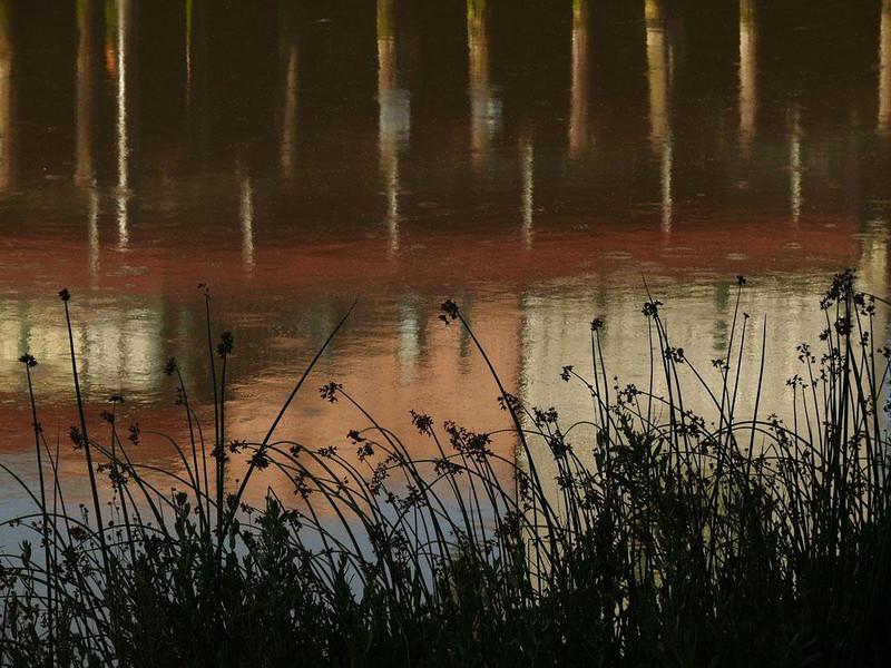 Pilings and reeds, Petaluma River - The Petaluma River flows through the heart of the city. It is actually a tidal estuary linking San Pablo Bay and San Francisco Bay.