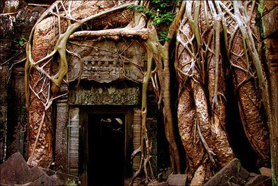 Roots at the door, Ta Prohm, Cambodia - The Banyan trees engulf the walls of Ta Prohm. I underexposed the shot to stress the texture of the roots themselves. I also tried to compare the size of the roots to the size of the door, creating contrast in scale.