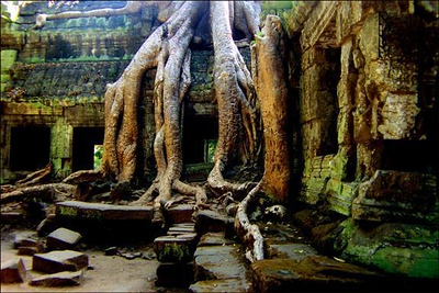 Nature's way, Ta Prohm, Angkor, Cambodia - For twelve hundred years, this Banyan tree has been slowly enveloping the Khmer temple of Ta Prohm. I thought these roots looked like a giant claw descending from the skies, eventually consuming everything in its path.