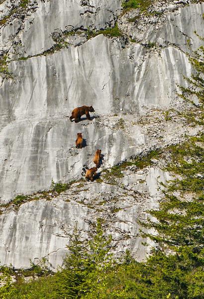 19  Brown bear family, Glacier Bay, AK