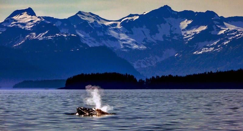 68  Curious humpback, Frederick Sound, AK
