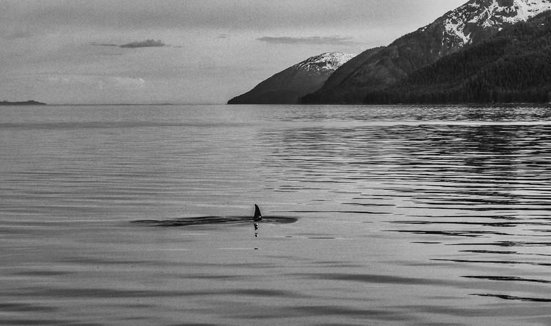 27 Orca off Chichagof Island, AK