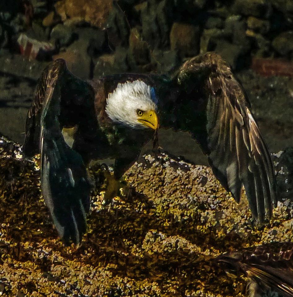 56  Fearsome sight, Pybus Bay, AK