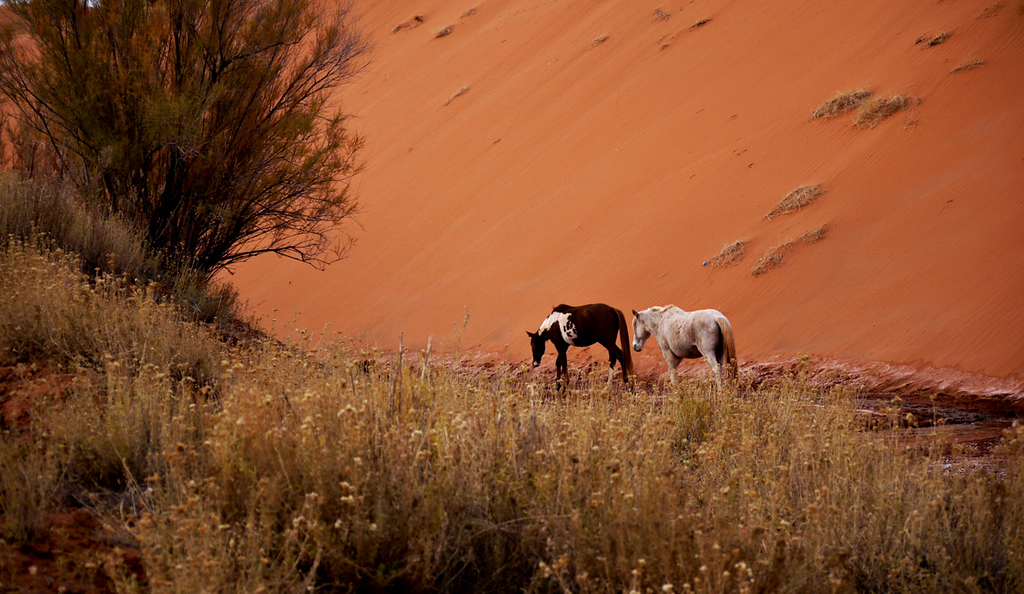 Navajo horses, Monument Valley