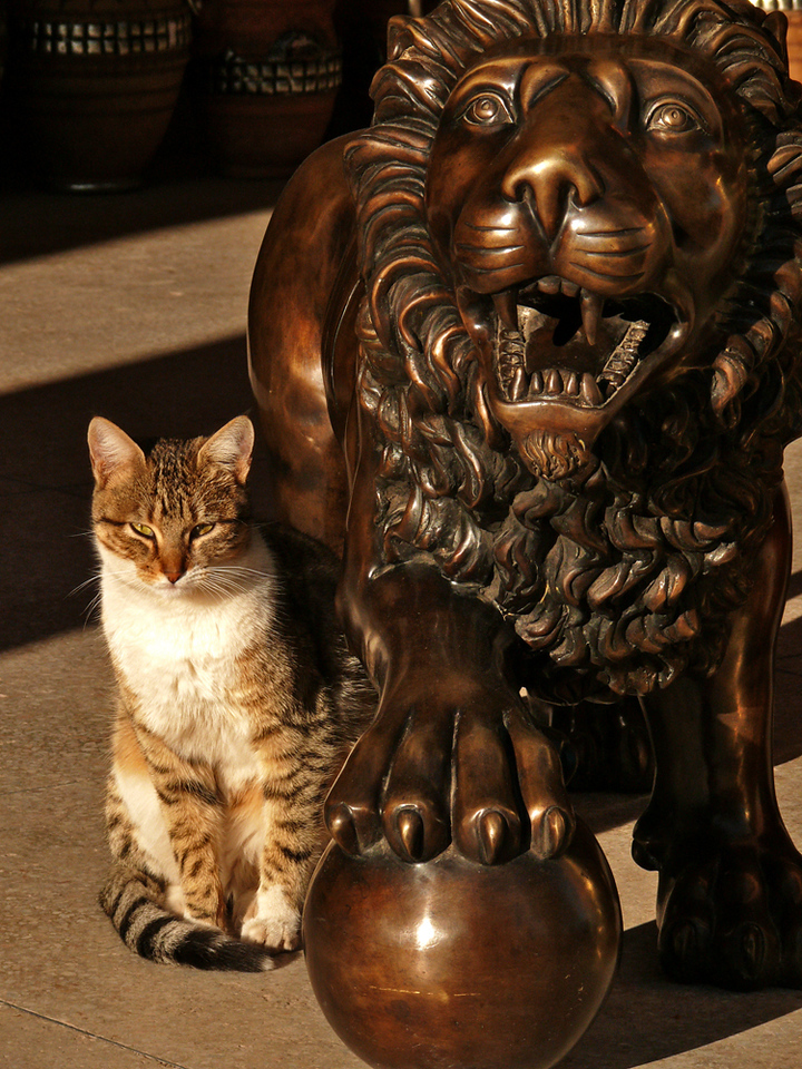 Role Model, Ouarzazate - Two cats, one furry, the other bronze, take the morning sun together on the porch of a metalworking shop in Ouarzazate.